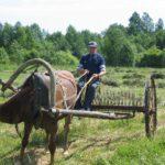 Сельское хозяйство на удомельской земле, есть ли повод для оптимизма?