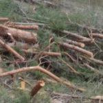 В Тверской области лесорубы завалили отходами окрестности посёлка Куженкино