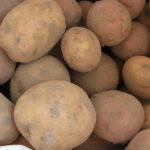 Остаёмся голодать: Неурожайный из-за летних холодов год может привести к значительному росту цен