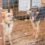 Конаковские зоозащитники просят губернатора Руденю спасти бездомных животных города