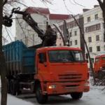 Филигранная «омолаживающая обрезка» деревьев на бульваре Шмидта