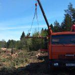 В Кимрах варварски вырубают лес на берегу Волги: за жителей вступились депутаты КПРФ и ЛДПР