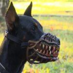Житель Тверской области заплатит за выгул своей собаки без намордника