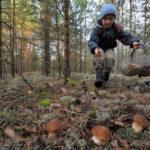 Теневой бизнес россиян: за сбор ягод и грибов скоро придётся заплатить