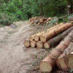 КТО ОСТАНОВИТ ОХОТНИКОВ ЗА «ЗЕЛЁНЫМ ЗОЛОТОМ»? Мы продолжаем публикации о варварских вырубках леса в Тверской области