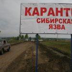 Осторожно, сибирская язва: в Тверской области опасность представляют открытые скотомогильники