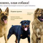 Собак собираются поделить на опасных и не опасных. Госдума предлагает для опасных существенные ограничения.