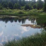 Речка Шлинка – неприглядная картинка. Кто виноват в убийстве реки: местная власть, Минобороны или само население?