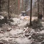 Торопецкий район: независимая экспертиза вскрыла огромный ущерб, нанесенный расхитителями леса