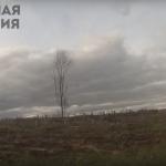 В Осташковском районе массово рубят лес