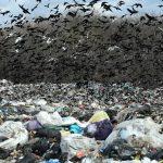 Нелидовский мусор