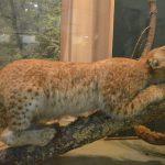 Осквернял святое место: на Селигере закрыт уникальный музей местной природы