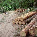 Чудеса торопецкой юриспруденции. Проверяемые по делу о хищениях леса решали за проверяющих? И будут ли установлены виновные?