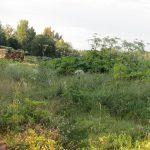 Успешное сельхозпредприятие или «потемкинская деревня»? Гражданские активисты Оленинского района рассказали о состоянии дел в ООО «Гусевское»