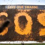 Исчезновение пчёл может привести человечество к гибели. Почему в мире массово вымирают медоносные насекомые?