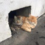 Подвалы откроют для кошек. Правительство РФ пошло навстречу животным