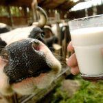 «Молочные войны» на пути взаимной интеграции