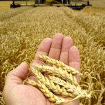 Стагнация на дне пропасти. В Тверской области подсчитывают собранный урожай