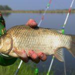 Что принесёт нам новый закон о любительском рыболовстве и как реагируют на него в Тверской области?