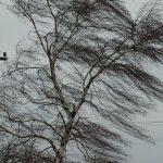 В Тверской области ожидается штормовой ветер