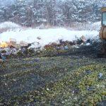 В Тверской области уничтожили 20 тонн польских груш. Кому от этого лучше?