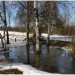Зима продлилась недолго. В Тверской области снова слякоть, дождь и ветер