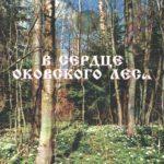 Жители Нелидовского городского округа предлагают придать Оковскому лесу статус Национального парка. Публикуем статью краеведа Людмилы Кузнецовой-Потоцкой