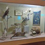 Музей природы в Осташкове останется без крыши над головой?