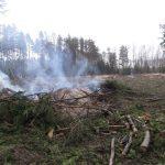 В Твери угрожают журналисту за то, что он попытался разоблачить коррупцию в лесной отрасли