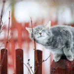 На Тверскую область наступает мартовская стихия. О погоде на выходных