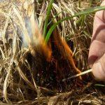 Пал сухой травы приводит к пожарам, нарушителей ждут штрафы. МЧС предупреждает