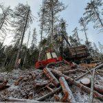 Леса украдено на миллионы. Тверское УМВД проинформировало о незаконных вырубках леса на территории региона в 2019 году, масштабы хищений впечатляют