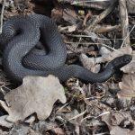 В Тверской области раньше положенного проснулись змеи. Что делать при встрече с гадюкой?