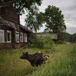 Женщины в Тверской области живут на 10 лет дольше мужчин