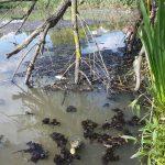 Неработающие много лет очистные сооружения создают в Оленино экологическую угрозу