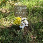 Там, где собака зарыта: в Бобачёвской роще Твери хотят ликвидировать кладбище домашних животных с двадцатилетней историей. Что делать, если ваш питомец умер?