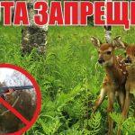 Ограничение охоты на территории Тверской области продлено до 1 июля