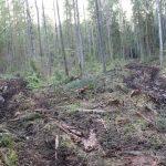 Борьба за торопецкий лес продолжается