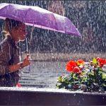 Тепло и сыро. Прогноз погоды в Тверской области на текущую неделю