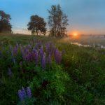 В ближайшие дни в Тверской области будет жарко