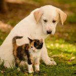 Сколько в России собак и кошек?