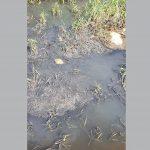 В Ржеве канализация течёт в Волгу