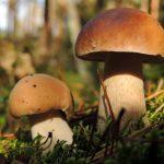 Выбирай и готовь грибы правильно! Роспотребнадзор рекомендует