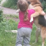 В Вышнем Волочке бездомный пёс спас ребёнка. Ценой собственной жизни