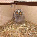 В реабилитационном центре для животных в Зубцовском районе спасли сову