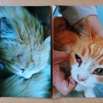 В Осташкове  женщина попросила детей убить кота, но соседи спасли животное?