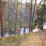 …Скоро лес вырубят весь, внукам точно ничего не достанется, — говорят жители Старицкого района