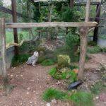 Был бы повод. Как в Тверской области живётся полярной сове?