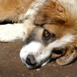 Житель Старицы осуждён за расправу над собакой. Живодёр выстрелил в пса, затем привязал его к квадрациклу и таскал по селу