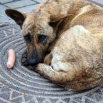 Наше собачье дело. Областная власть озаботилась созданием государственных приютов для домашних животных, однако с этой заботы может получиться большой скандал и противостояние с общественниками